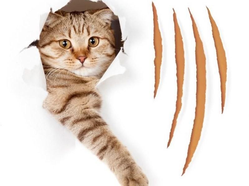 Кот дерет обои — как отучить кота драть обои?